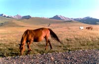 Mountain meadow with horses. Click to enlarge